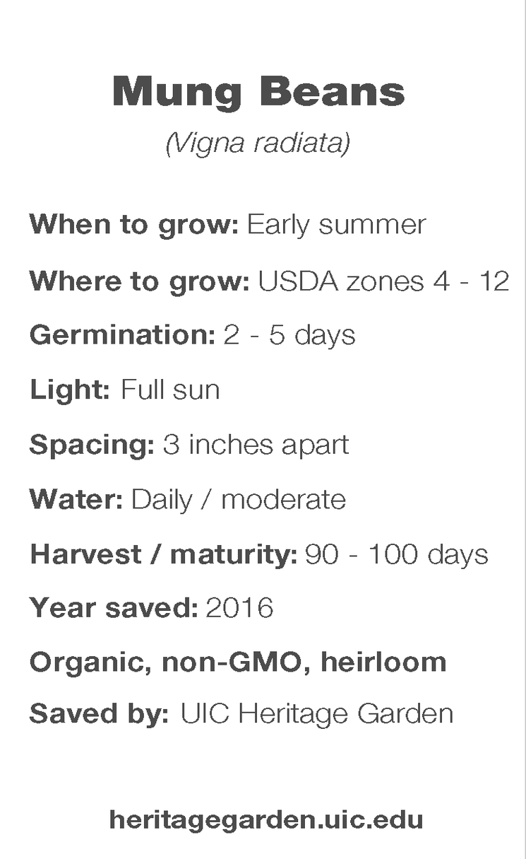 Mung Bean growing information