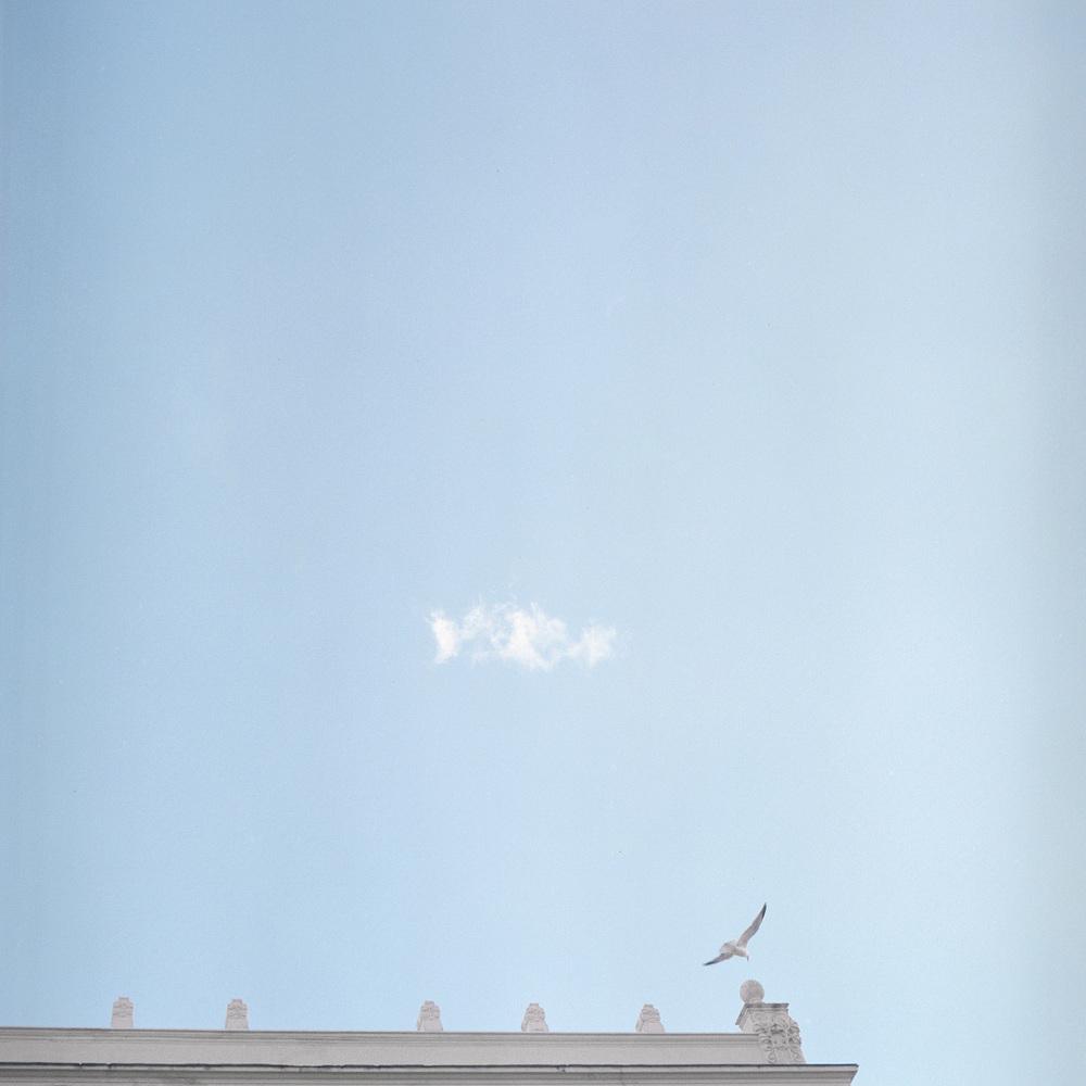 bird in sky.jpg