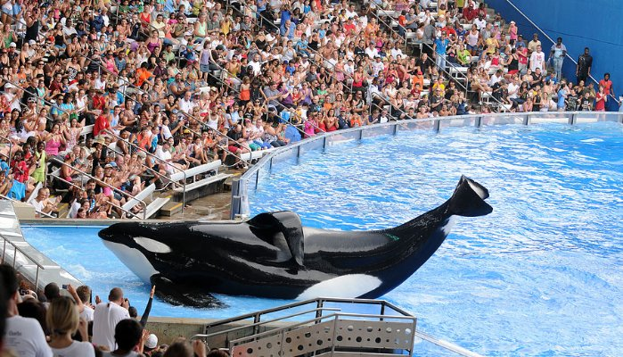 SeaWorld Publicity Gone Wrong: The Trending #AskSeaWorld Campaign