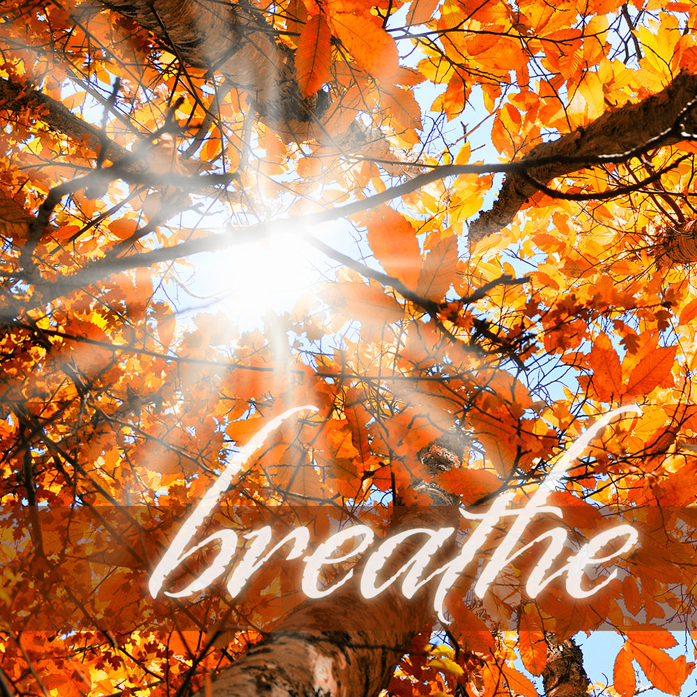 BREATHE: Inhale Nov 27, 2016 Study Guide