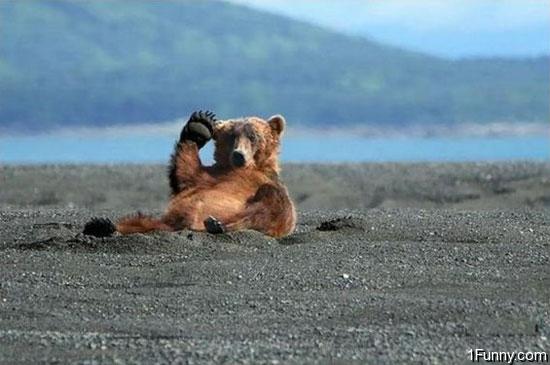 oh-hi-bear.jpg