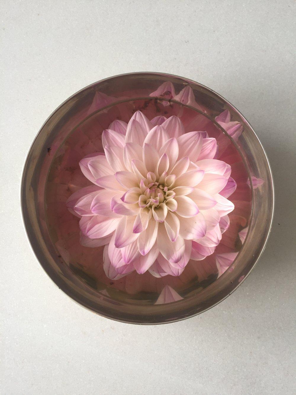 A flesh cut pink flower floats in a reflective brass bowl.