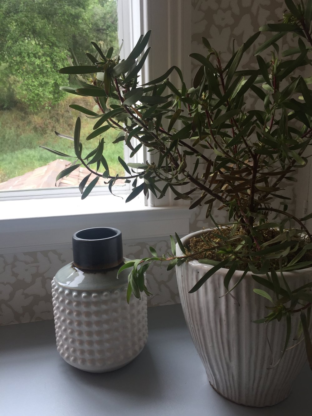 The windowsill hosts a potted plant plant and features a magnificent view of the garden.