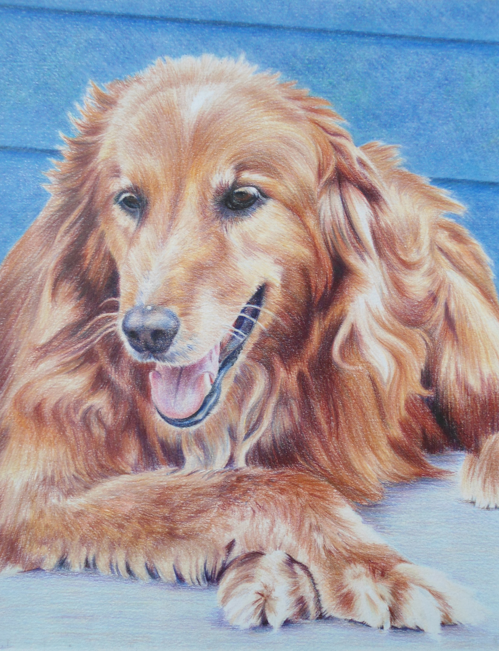 colored pencil 2011