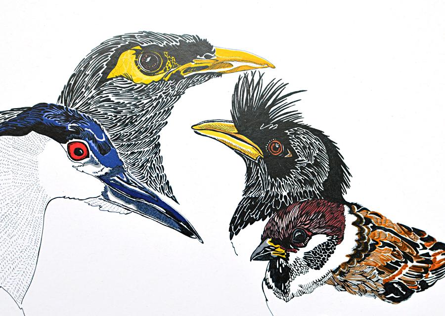 W Bird 08.jpg