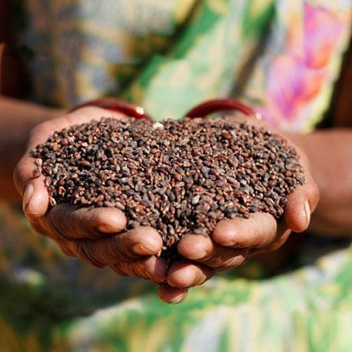 grape-seeds website.jpg