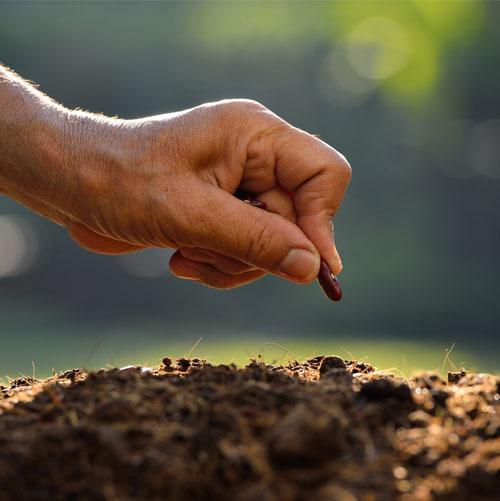 planting seed website.jpg