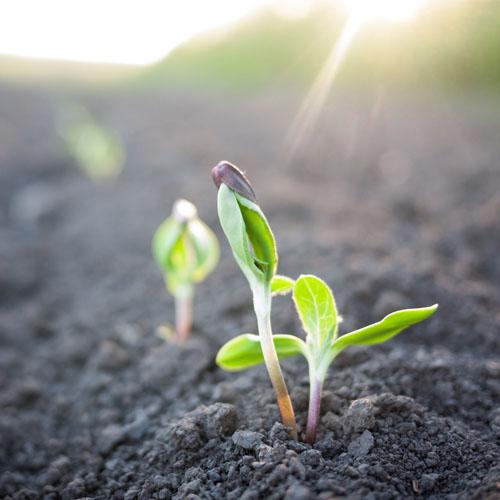 seedling website.jpg