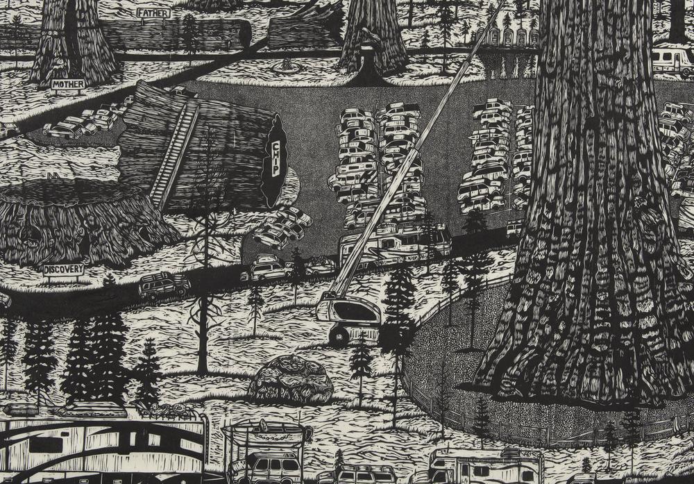 Sequoiadendron giganteum (detail)