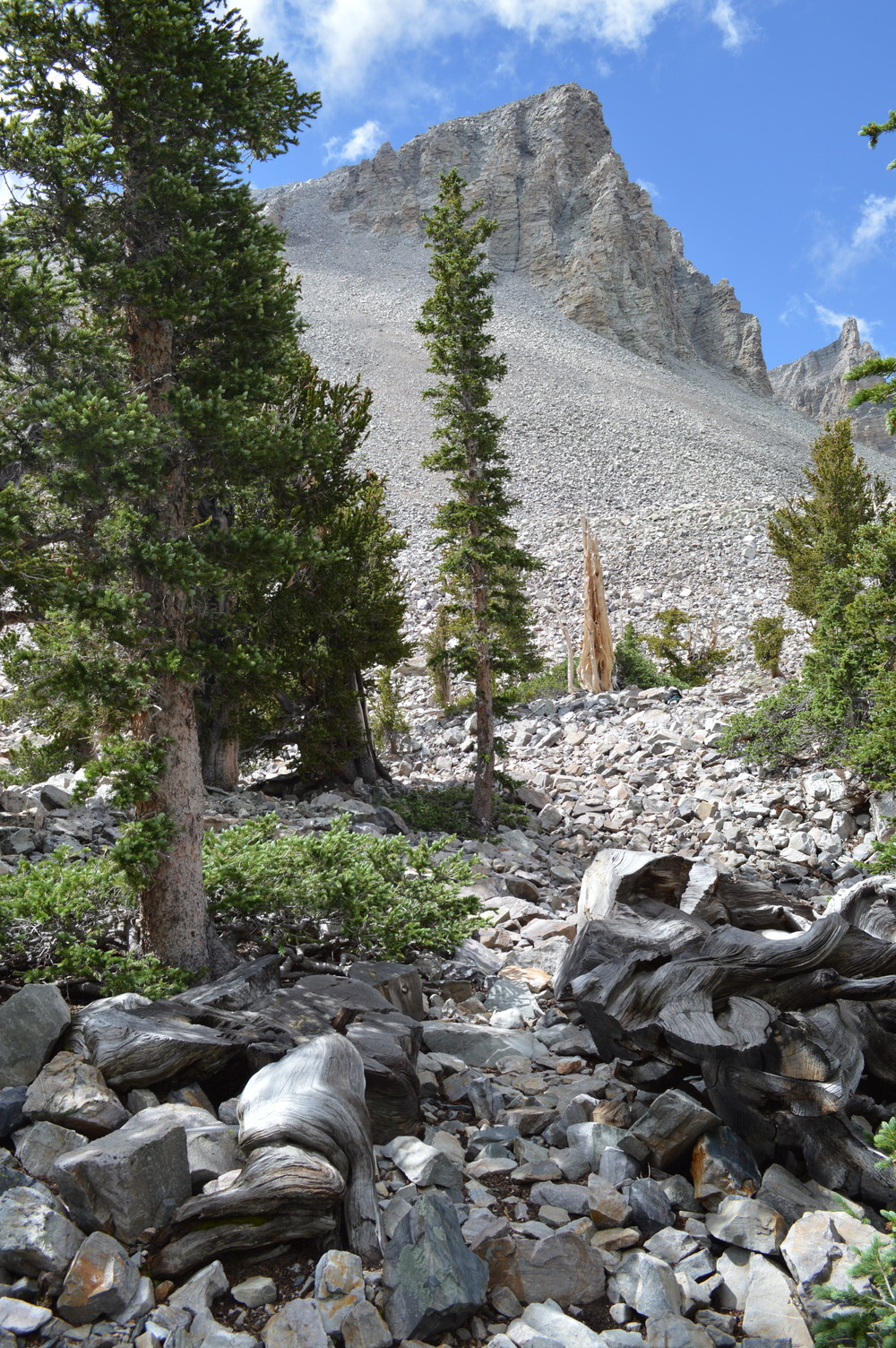 The Prometheus Stump (Foreground), Wheeler Peak (Background).