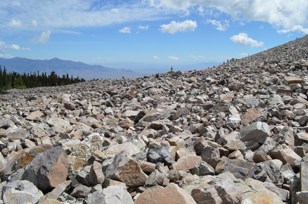 Glacial Moraine at tree line on northeast face of Wheeler Peak, (Near Prometheus Stump)
