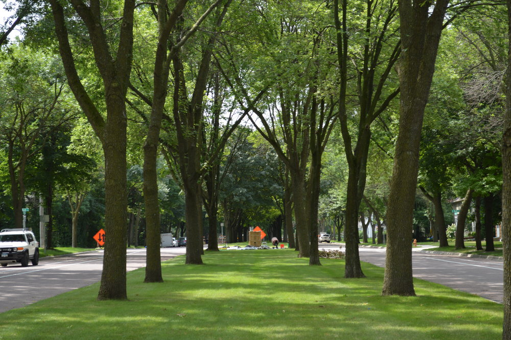 Broad Street Boulevard, Mankato, looking southwest below canopy of ash trees, sculpture mold positioned at the end of block.