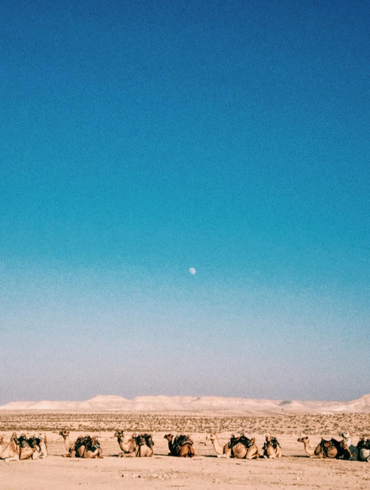 My favorite image captured from the trip. Camels under an almost full moon in the Negev Desert with the Bedouin people.