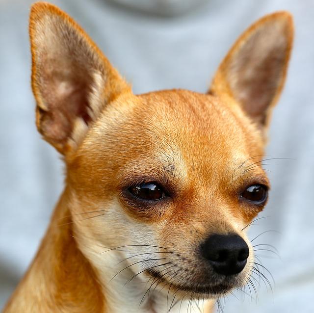 Read Spanish —El perro de Mario y Florencia era muy sabio e inteligente.
