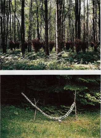 Top: Untitled, 1994. 1/4-mile of wire and 32 fir trees, 10 x 60 x 67 ft. diameter. Bottom: Untitled #2, 1994. Poplar and cuprinol, 42 x 108 x 3.5 in.
