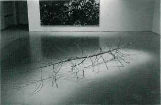 Twins, 2000. Saplings, installation view
