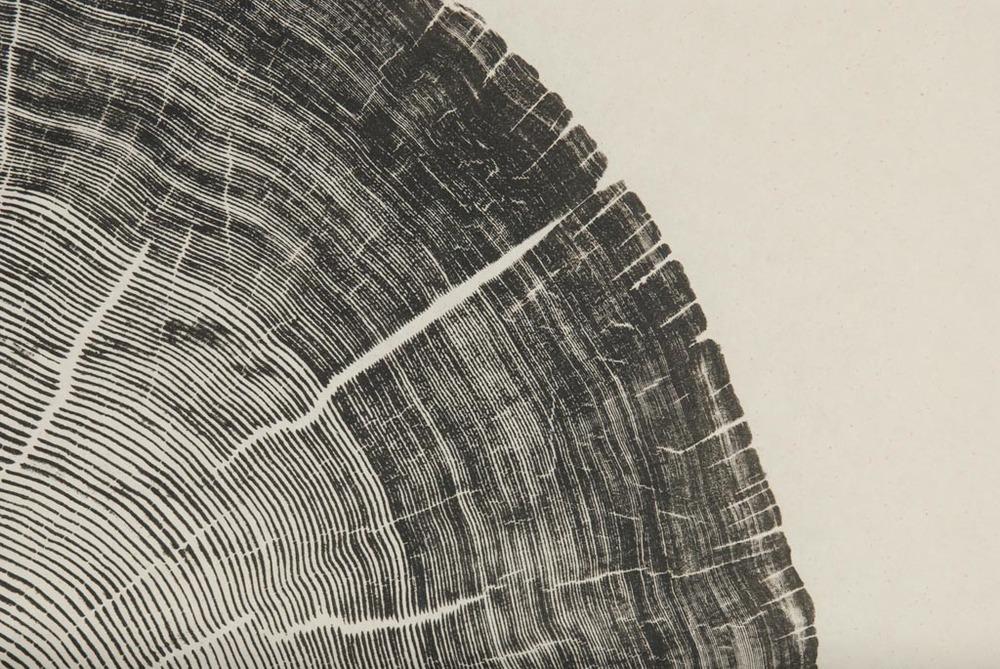 Cedar Pole (detail)