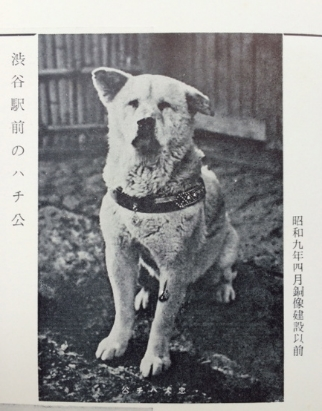 "Hachiko, image from the old magazine ""Shibuya Meibutsu"" 1934"