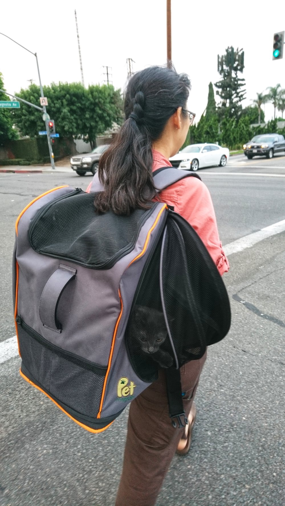 Difficult urban environments such as crossing a busy street with your cat become as easy as wearing a backpack!