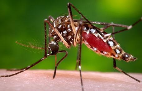Pagan-real-kind-novato-mosquito-deet-free-natural-organic-zika-marin