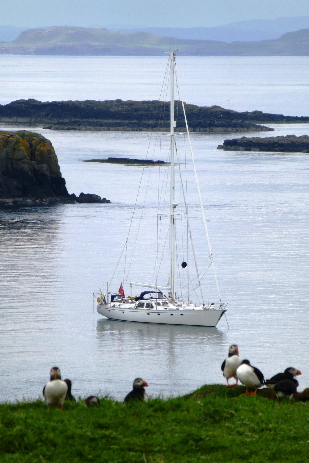 Puffins on Lunga © Moonshadow Yacht Charter Ltd
