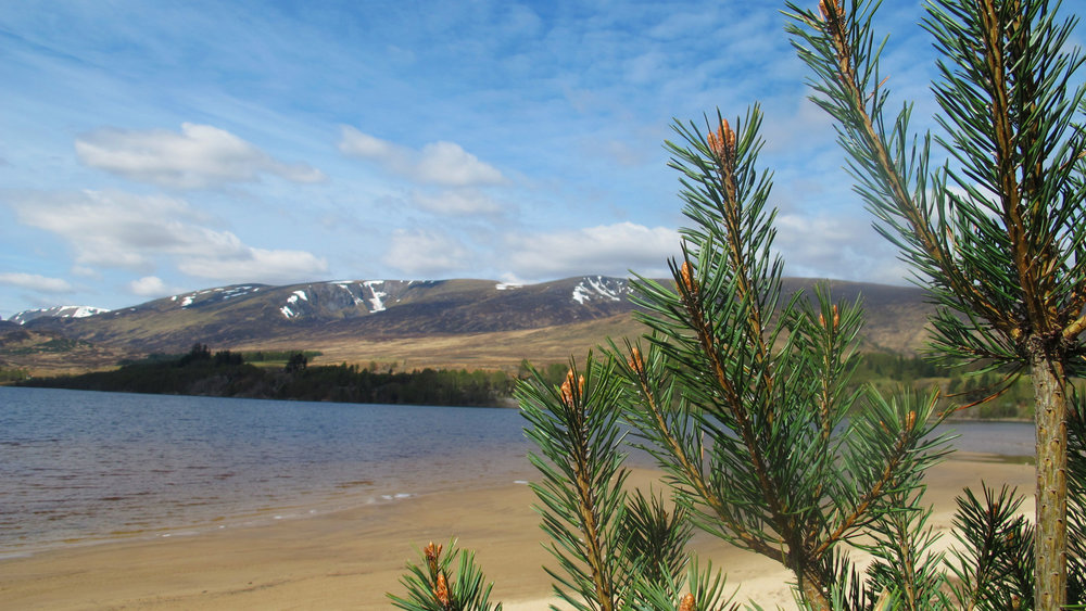 Beach at Loch Laggan