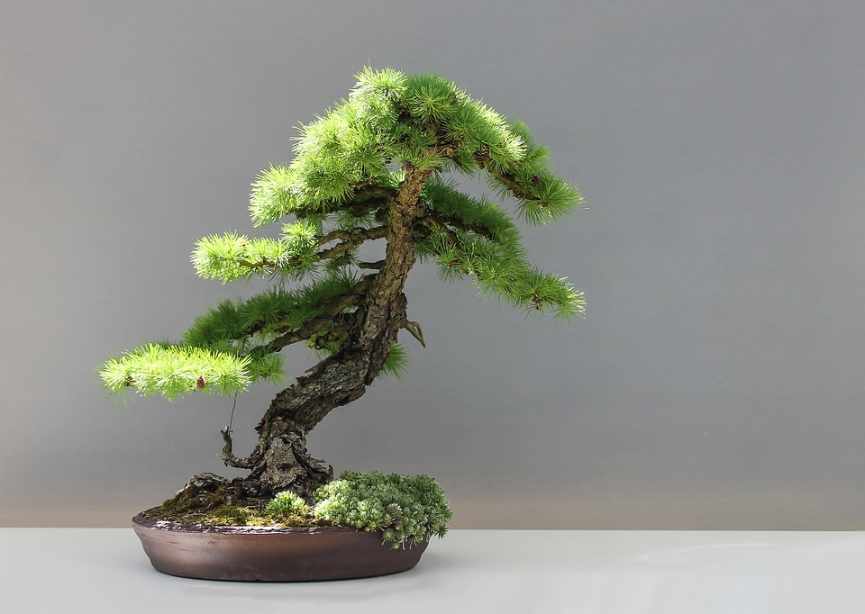 bonsai1805499960720.jpg