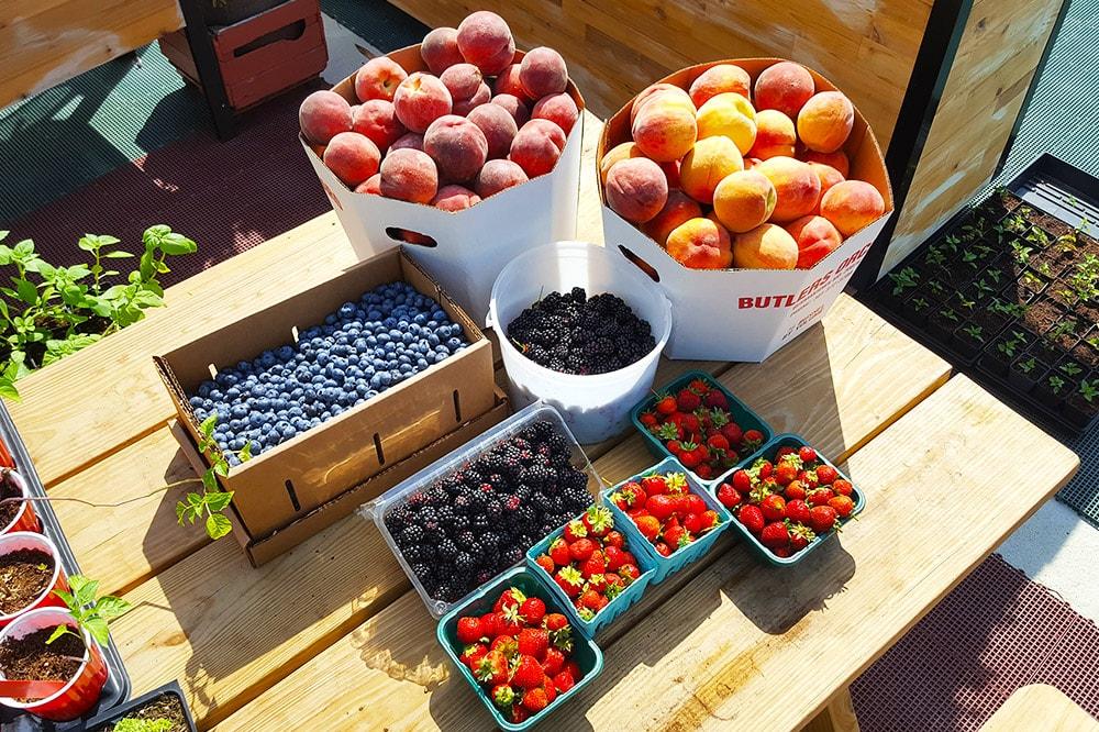 berries-min.jpg