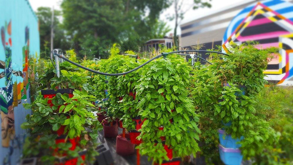 Garden-1-1-min.jpg