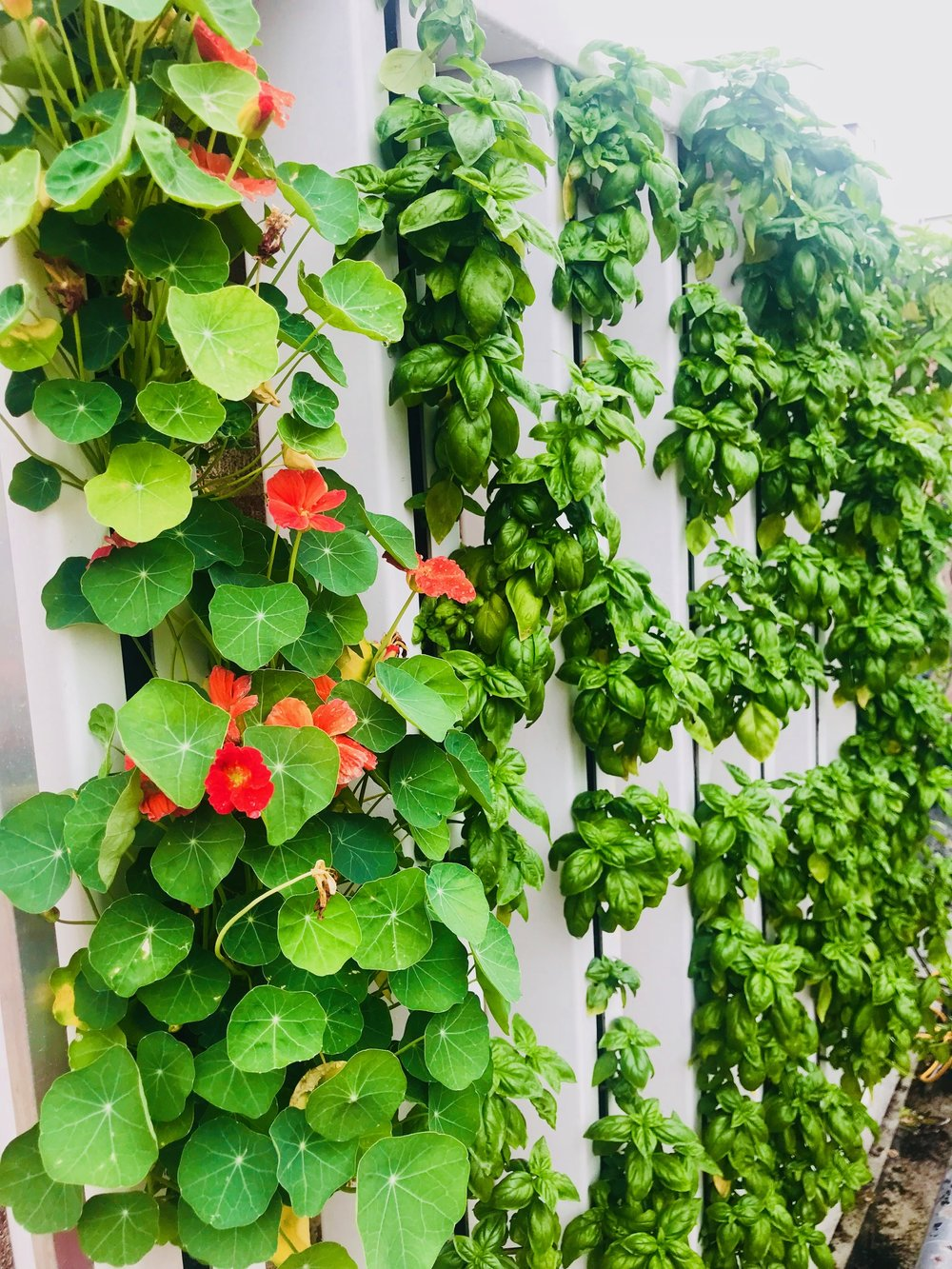 Hydroponics/Aquaponics  We specialize in indoor/greenhouse growing solutions.  We offer parts and resources for you to build, maintain, and grow your perfect hydro/aquaponics systems.  Contact us with inquiries at  info@cultivatethecity.com