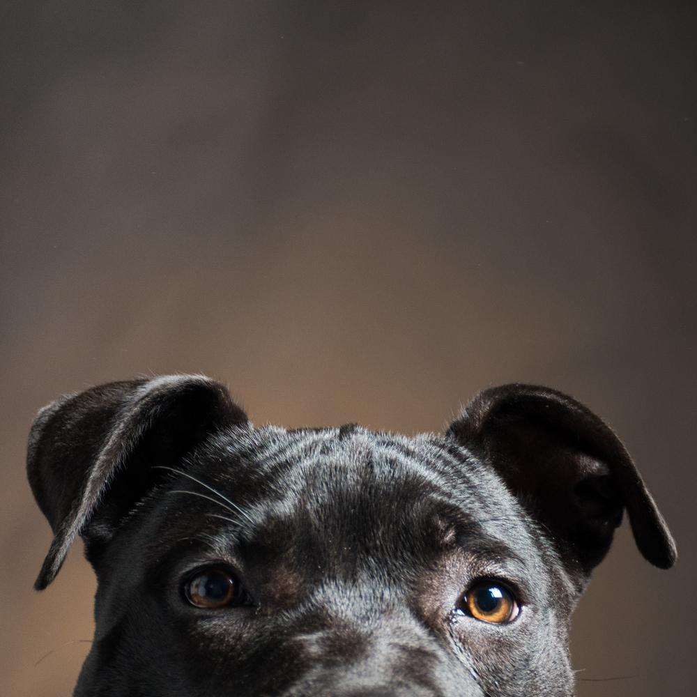 DogPortrait-039.jpg