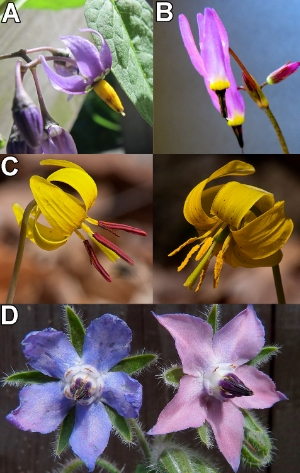 Bees might learn that the colors of petals, anthers, or pollen itself predicts pollen rewards.