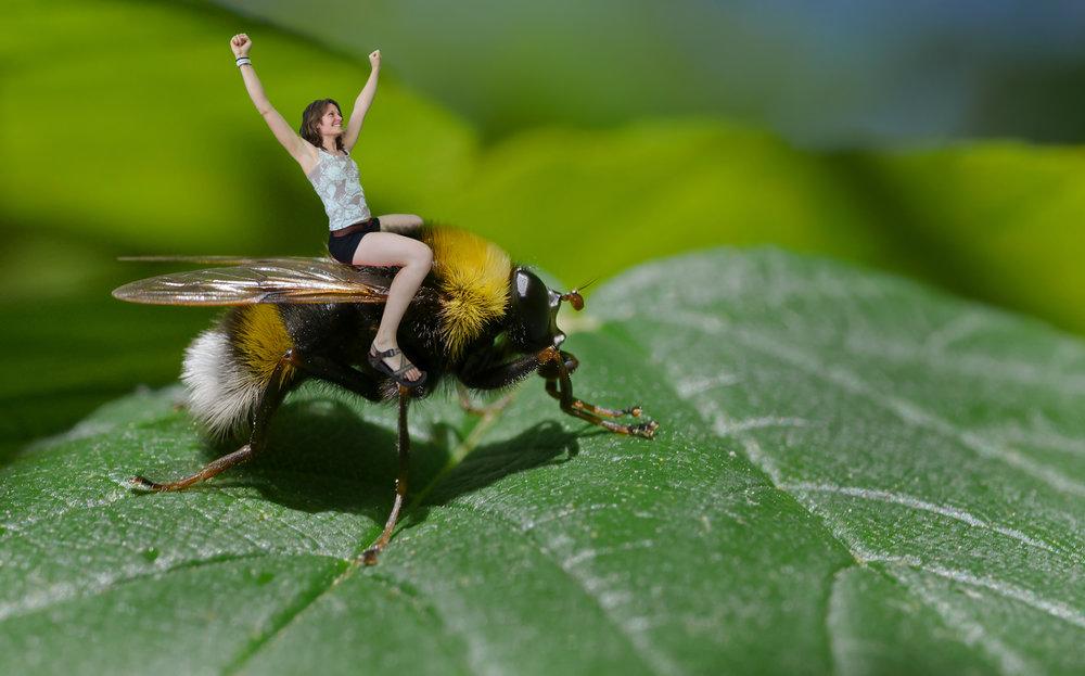 felicityridinghoverfly.jpg