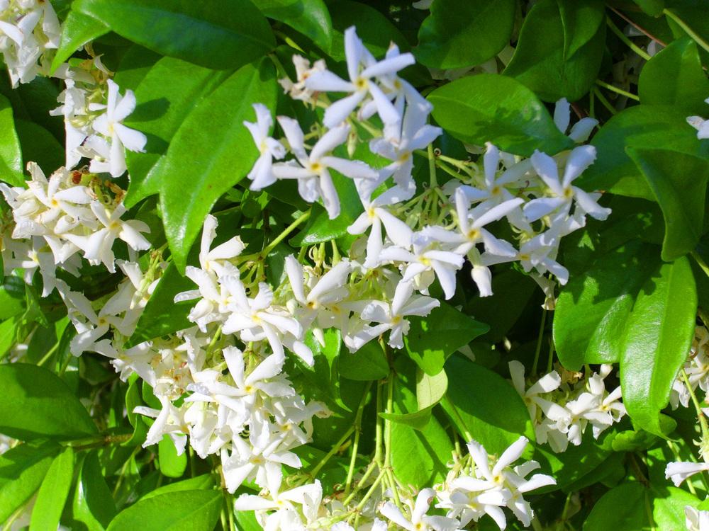 Flower shot 2.jpg