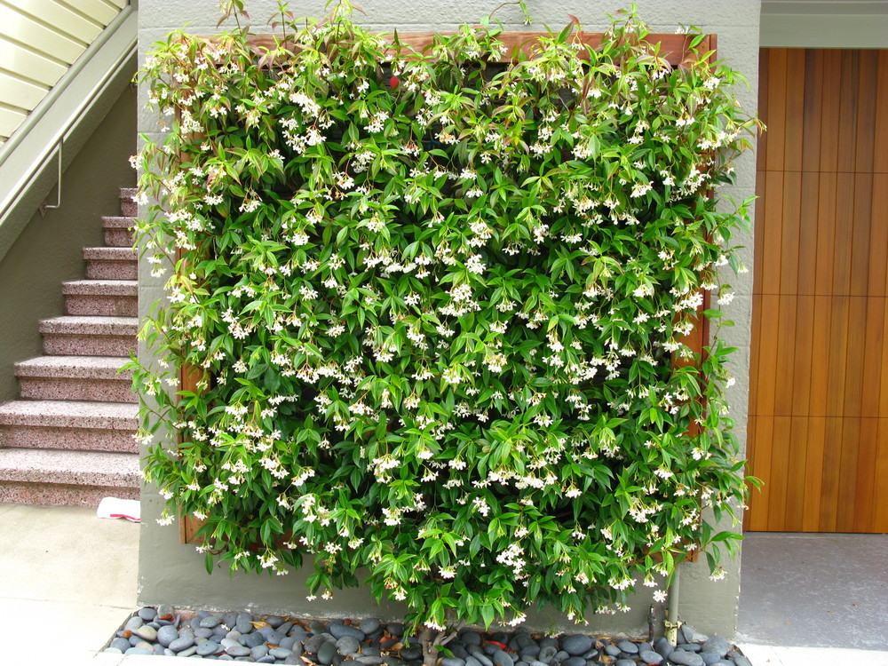 Jasmine feature wall.jpg