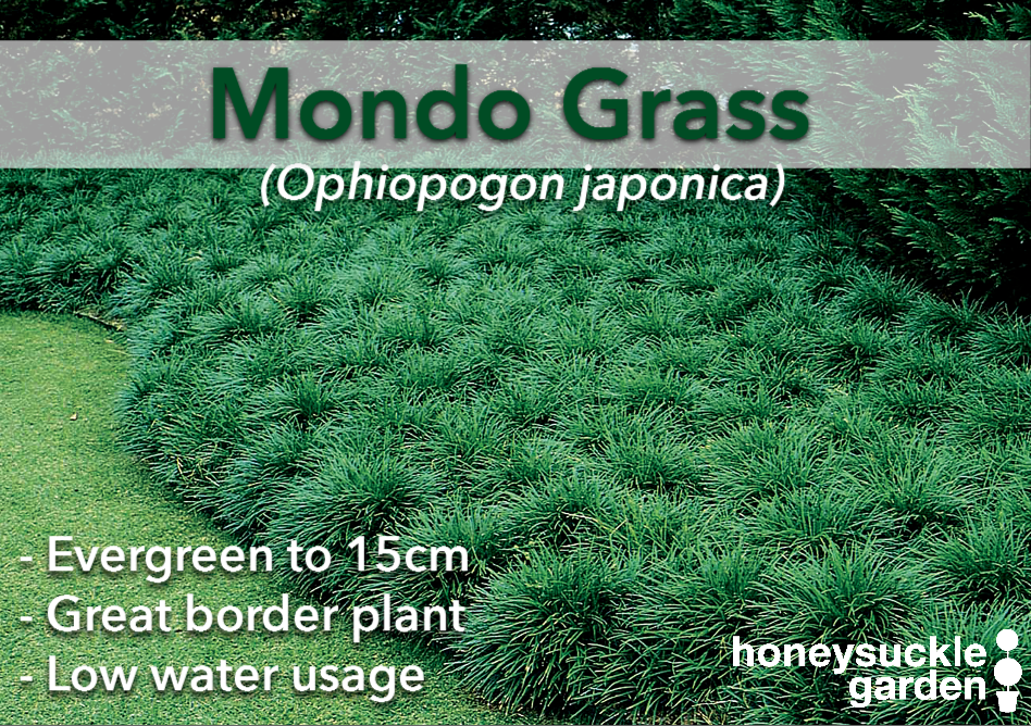 Ophiopogon jap.png