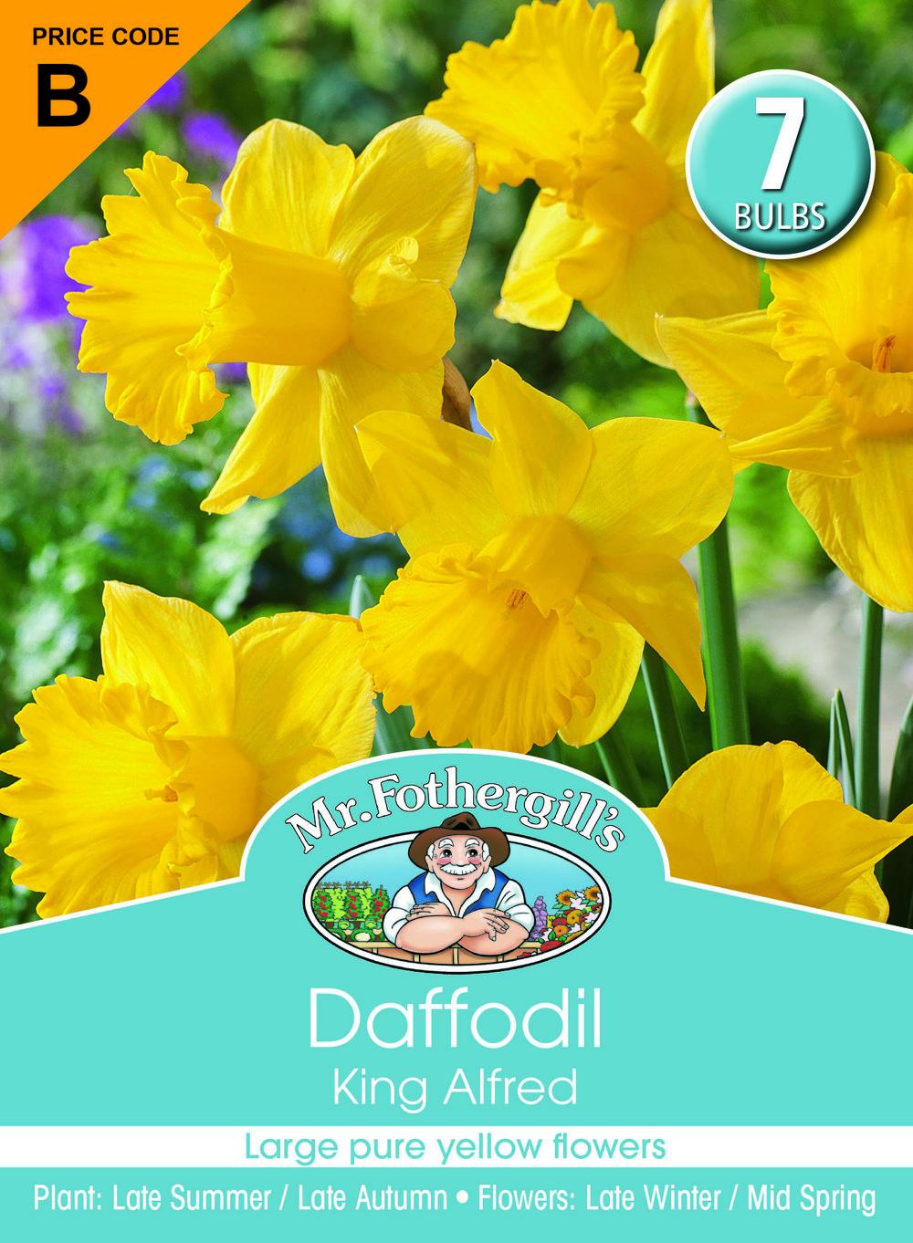 Daffodil King Alfred.jpg