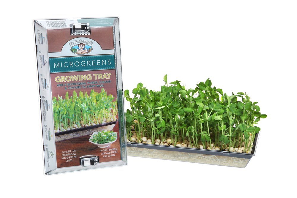 Microgreens tray pack & plants HR.JPG