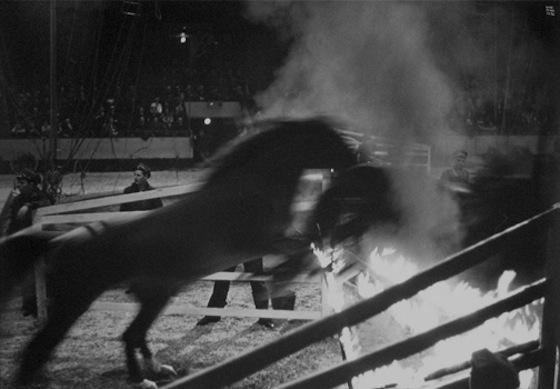 horse_fire.jpg