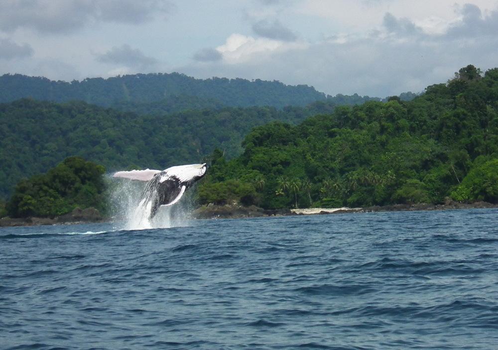 Whale20152.JPG