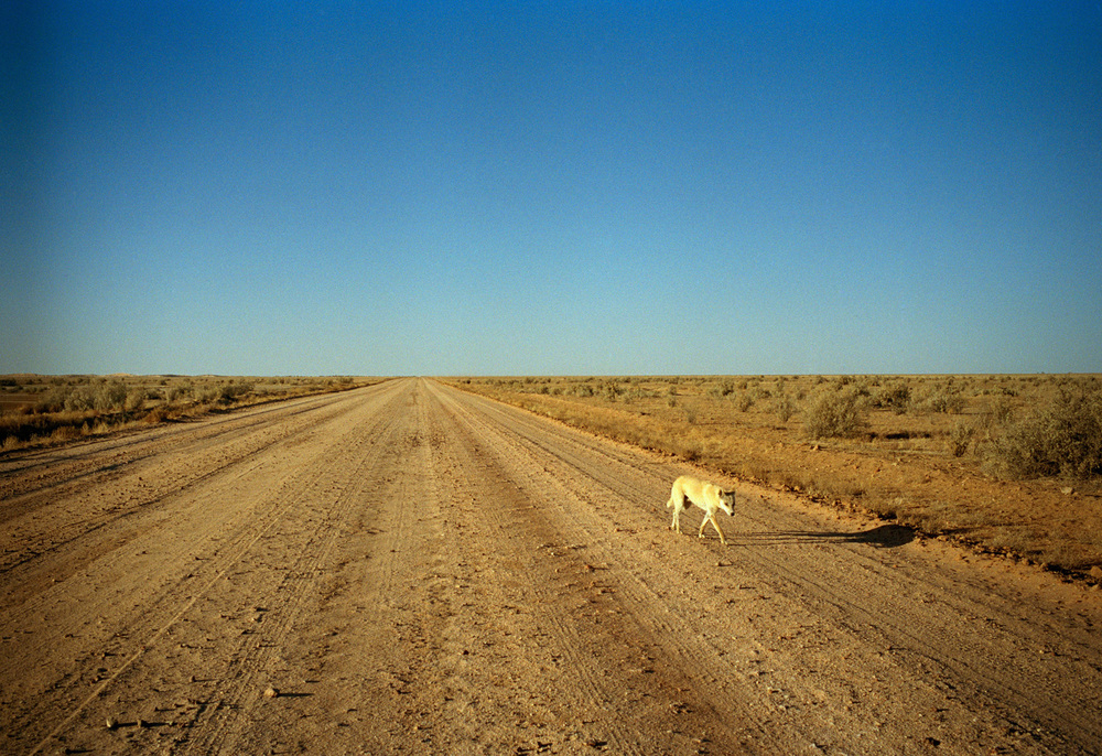 BirdsvilleTrack.jpg