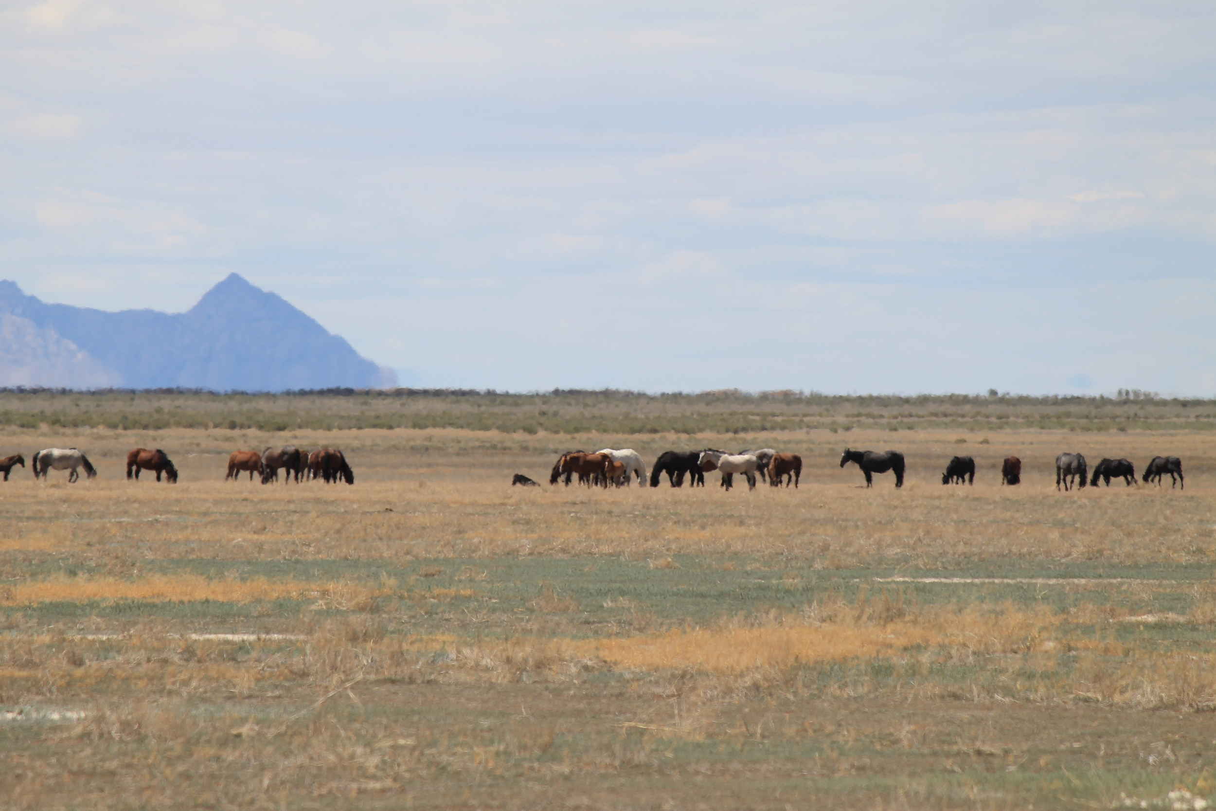 onaqui mountains wild horse tourist