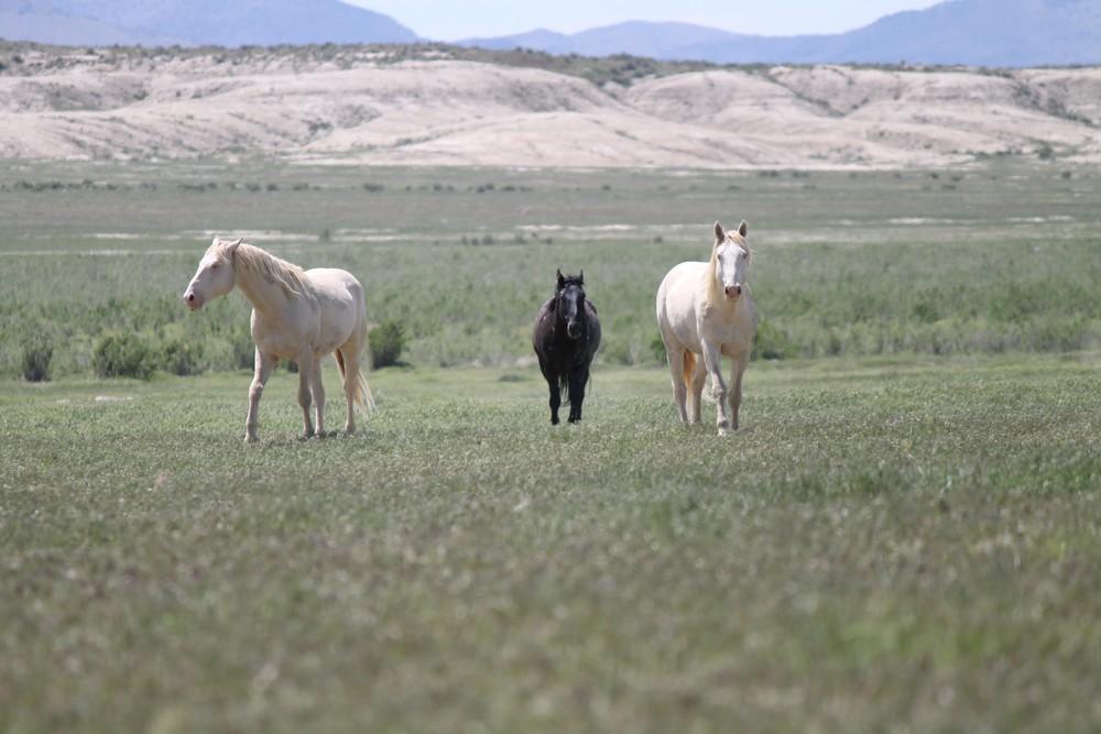 Three Stallions 1.jpg