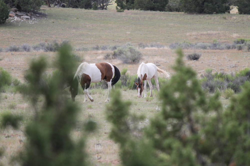 Grazing at Justesen Flats.jpg
