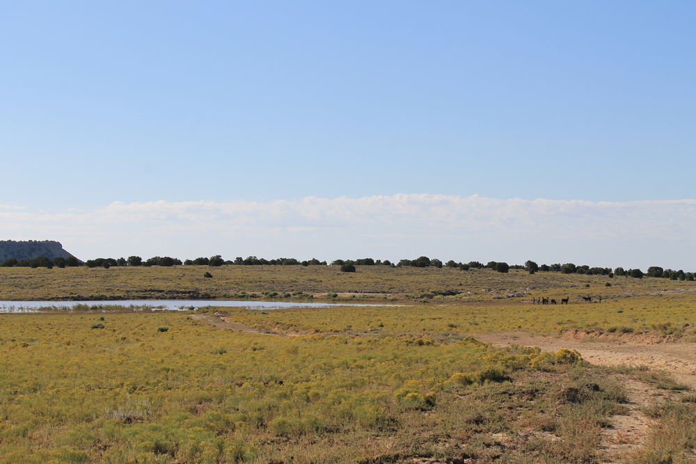 Waterhole south of Hyde Draw 1.jpg