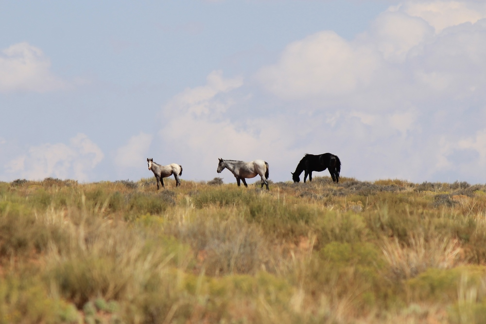 2 adults 1 foal Robber's Roost 5.jpg