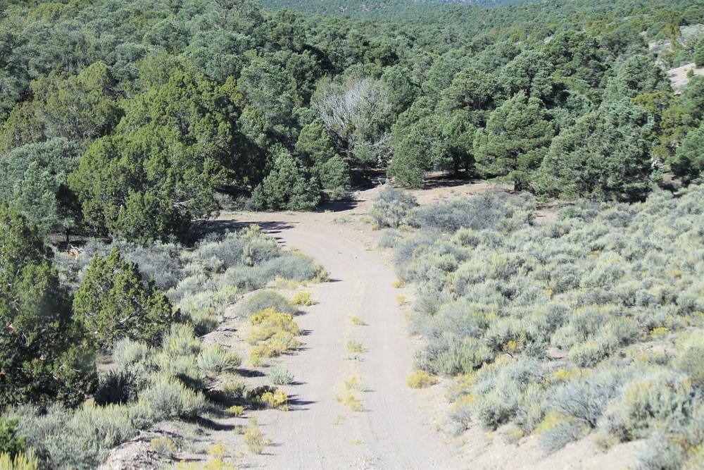 Lush desert woods