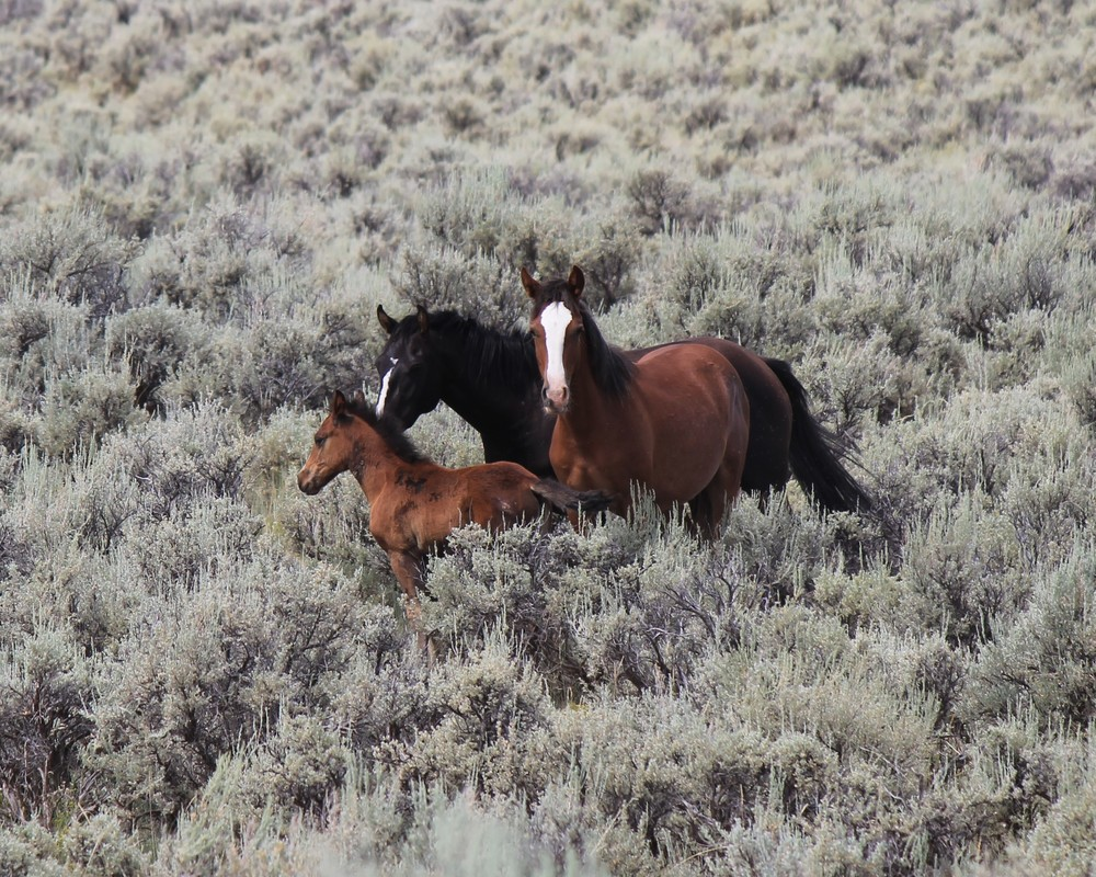 Pair with foal near Bull Canyon.