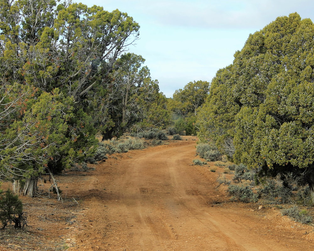 Sandy road through juniper forest