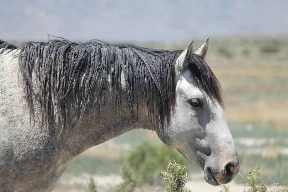 Onaqui Grey